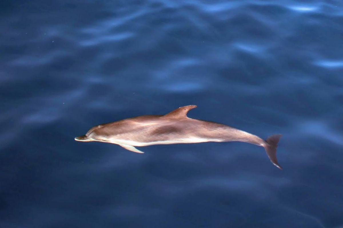 Výlet na kánoi za delfíny
