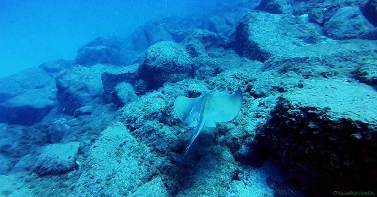 Potápění - jeskyně Tenerife
