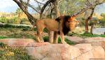 Junglepark vstupenka od 3 do 4 let
